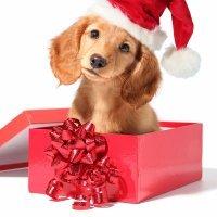 Quando o presente de Natal da criança é um animal de estimação