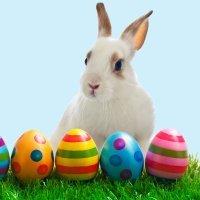 O coelhinho da Páscoa, origem e tradição