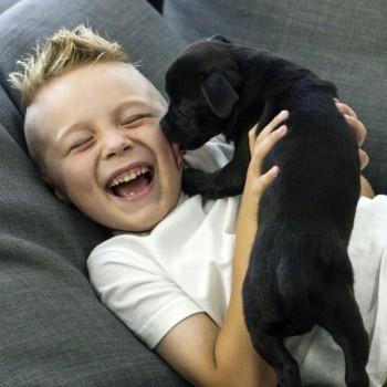 Piadas de animais para crianças
