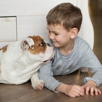 Adivinhas de animais para as crianças. Adivinhações infantis