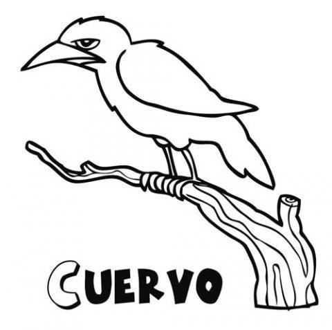 Dibujos de cuervos para colorear. Imágenes de aves para pintar