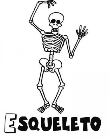 Dibujo de un esqueleto para pintar. Imágenes del cuerpo humano