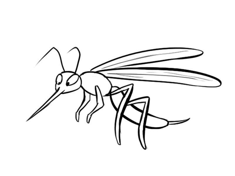 Dibujo de un mosquito, imágenes de insectos para colorear