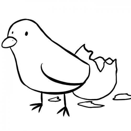 Pollito recién nacido