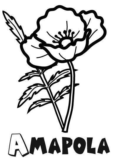 Dibujo para imprimir y colorear de una amapola. Dibujo de flores