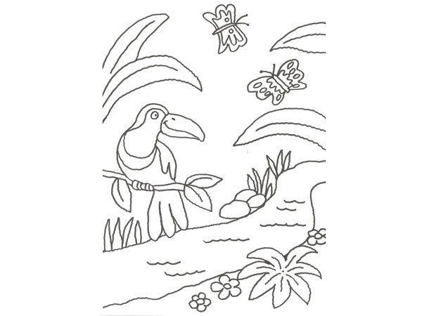 Desenho De Um Tucano E Borboletas Para Pintar