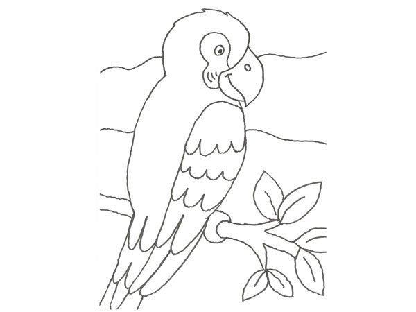 Desenho para imprimir de um papagaio