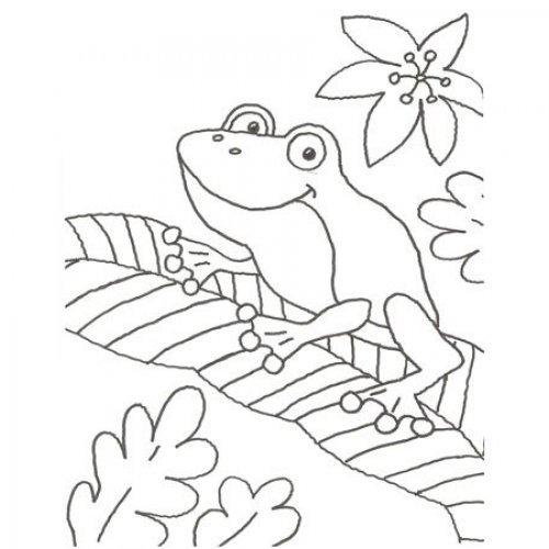 Desenho de um sapo numa folha para pintar