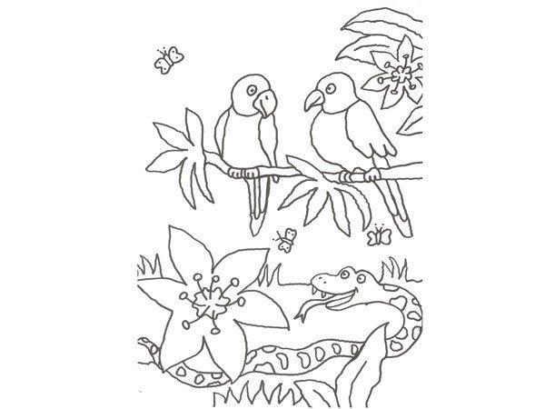 Desenho de papagaios e serpente para colorir