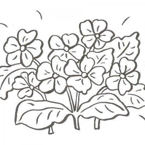 Desenho de violetas para pintar com as crianças