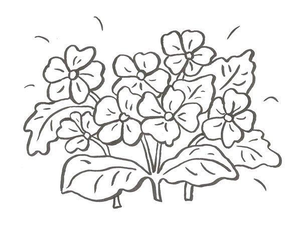 Desenhos De Flores Para Colorir Com As Criancas
