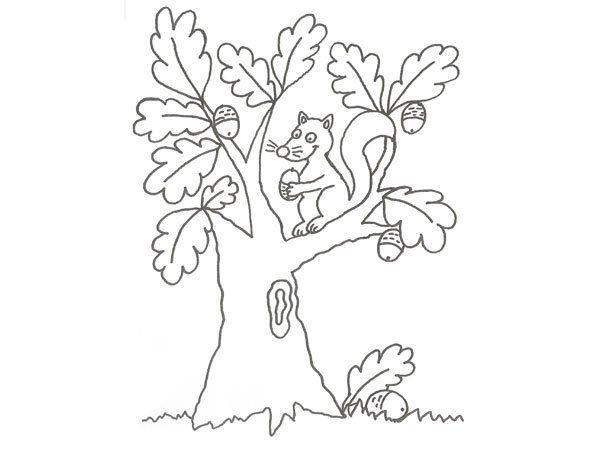 Desenho de um esquilo numa árvore para colorir