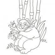 Desenho de um urso panda para colorir