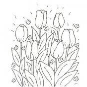 Desenho de tulipas para colorir com as crianças