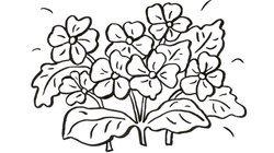 Desenhos de flores para colorir com as crianças