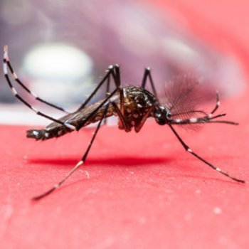 Colômbia e El Salvador pedem evitar gravidezes por causa do zika vírus