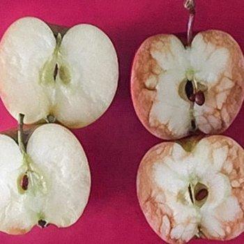 Uma professora explica com duas maçãs o que é o bullying