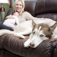 Como preparar o animal de estimação para a chegada do bebê