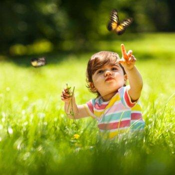 Sonhar com insetos. Interpretação dos sonhos das crianças