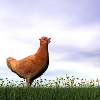 A galinha ruiva. Contos curtos para crianças