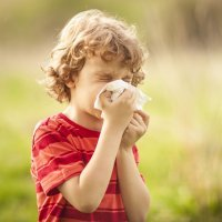 10 remédios caseiros para combater a alergia ao pólen