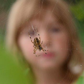 5 dicas para evitar picadas de aranha em crianças