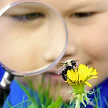 Como curar picadas de abelha ou vespa nas crianças