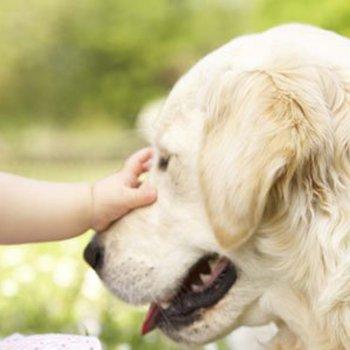 As raças de cachorro que melhor convivem com as crianças
