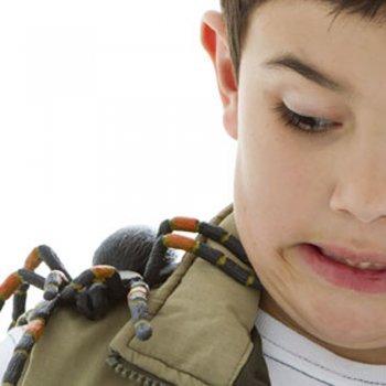 10 dicas para curar picadas de aranha em crianças